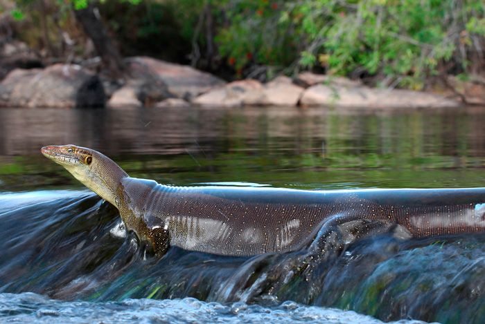 17 best images about reptile info on pinterest solar for Table 52 townsville