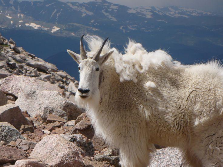 Mt. Evans, Colorado - the highest road in Colorado. Mt. Evans is 14,240 feet high.