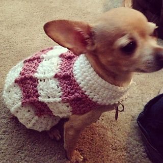Free Crochet Pattern Chihuahua Sweater : Best 20+ Crochet dog sweater ideas on Pinterest