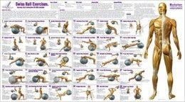 Balance Ball Exercise Chart / Poster