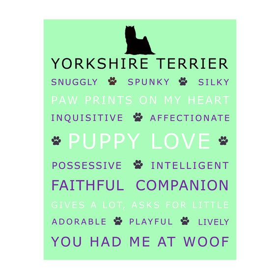 Yorkshire Terrier Poster Print Picture Wall Art, 8 x 10