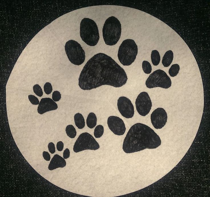 Can Dogs Get Stitches On Their Paws