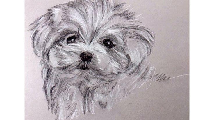 Como Dibujar un Perrito con Carboncillo y Lapiz Carbon Blanco y Negro   ...