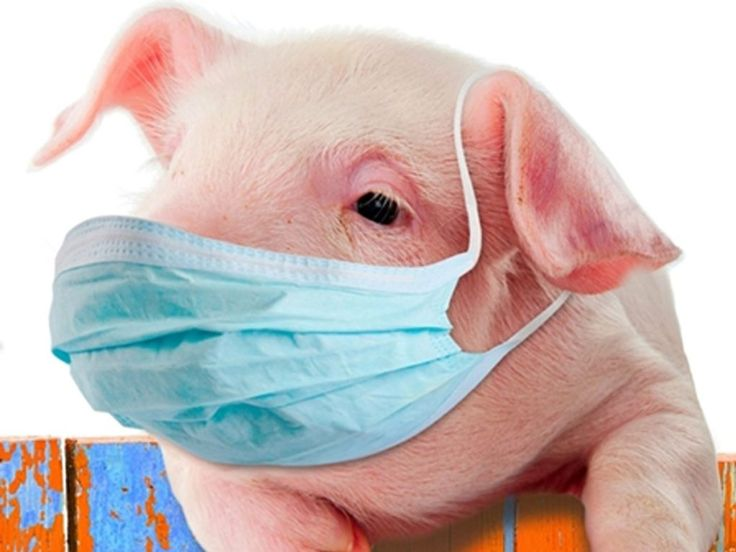 Some of the most effective home remedies for swine flu include the use of vinegar, cayenne pepper, honey, garlic, zinc, carrots, pineapples, Siberian ginseng, echinacea, and olive leaf, as well as behavioral changes, including exercising, staying hydrated, get more sleep, soak up some sunshine, increase your hygiene regimen.