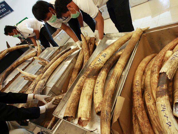 Ivory option trading
