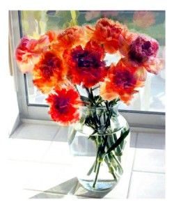 Carnation Art Prints