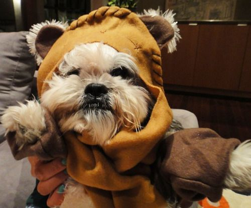 Top 25 Ideas About Ewok Dog Costume On Pinterest Baby