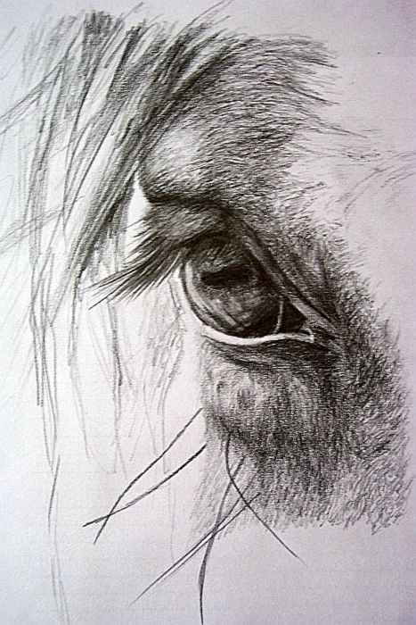 Caii in lumea artelor. Horse drawings love this!