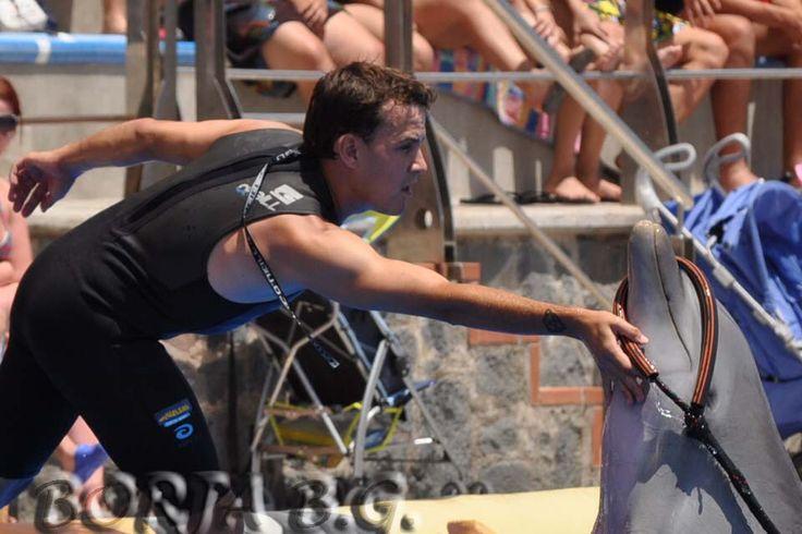 Show de delfines en Aqualand Costa Adeje con D. José Luis Barbero, quien me abrió las puertas de la Delfinoterapia. Entreno y bienestar animal.
