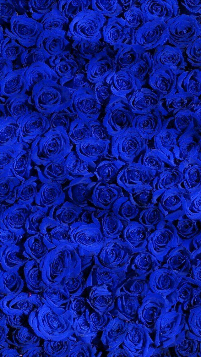 Flowerswallpaperiphone Blue Flower Wallpaper Blue Roses Wallpaper Royal Blue Wallpaper Blue rose wallpaper for phone