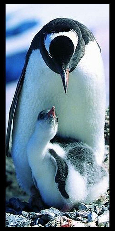 PENGUIN With Baby Photo Via Playkapook