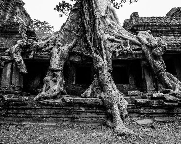 The powerful trees of Cambodia by Nadbrad Photography at www.nadbrad.com