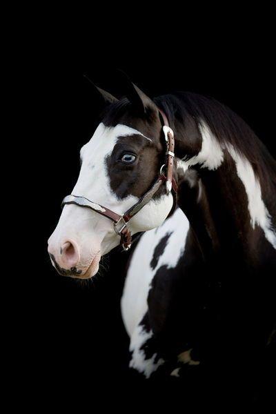 Paint Horse - Christiane Slawik