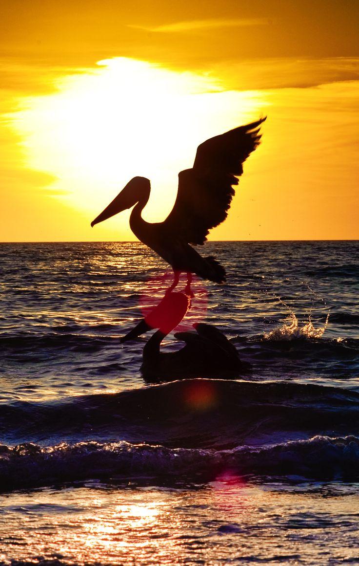 61 Best Nautical Naples Florida A2 Images On Pinterest