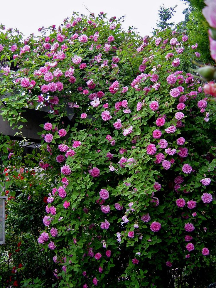 Love Garden Roses: 41 Best Cool Yard And Garden
