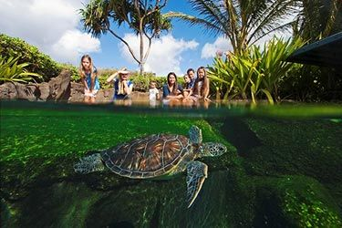 Maui Ocean Center $22.95 adults and 16.65 for kids - must purchase 3 days in advance