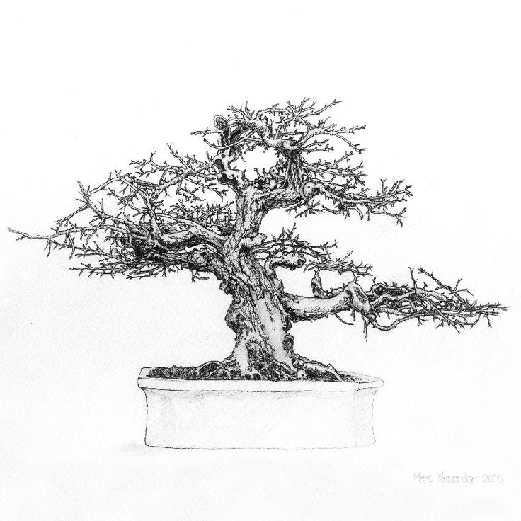 66 best images about bonsai drawing on pinterest bonsai - Dessin bonzai ...