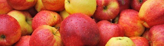 """300 wetenschappers: """"Genetisch gemodificeerd voedsel niet bewezen veilig"""" - http://www.ninefornews.nl/300-wetenschappers-genetisch-gemodificeerd-voedsel-niet-bewezen-veilig/"""