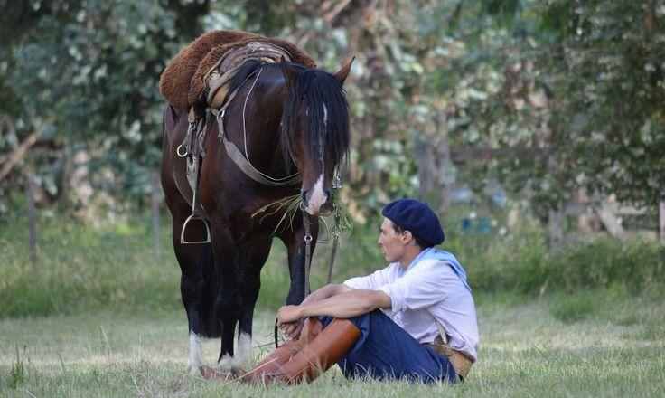 Caballo Criollo, compañero del hombre de campo
