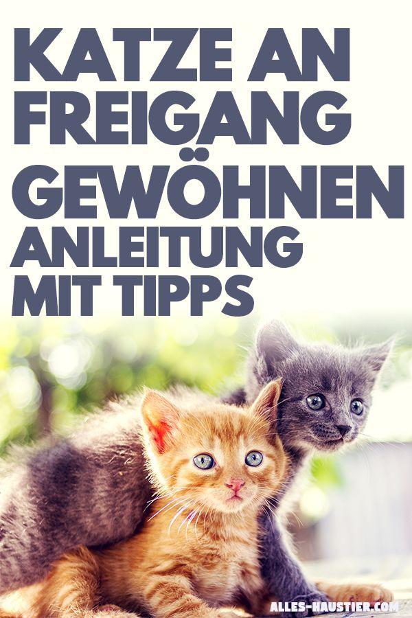 Katze An Freigang Gewohnen Anleitung Mit Tipps Fur Anfanger