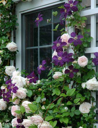 MJM Garden Design, Janie McCabe - Consultation & Design for a New Garden