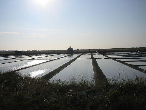 Ile de noirmoutier, marais salants, France
