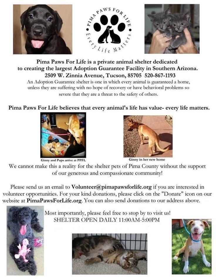 Pima Paws For Life Paw Cat Adoption Pima