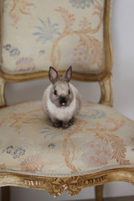 bunny on a chair...