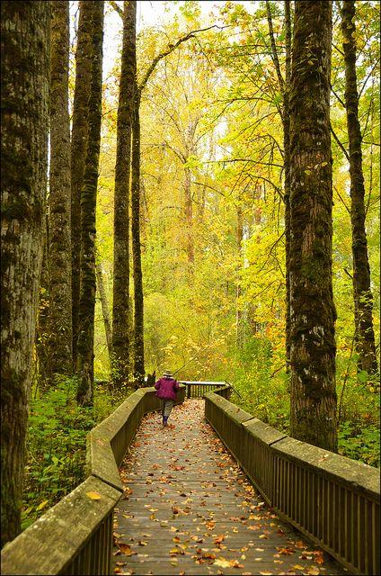 Nisqually National Wildlife Refuge Boardwalk - Nisqually, Washington --