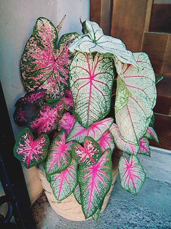 7 best mis plantas, mi patio y mi jardín images on pinterest