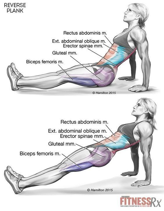 The reverse plank is the ultimate core builder. It is a simple but effective exercise to tone your core and tighten your midsection. It is incredible for losing weight fast.