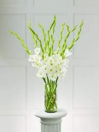 Gladiolus Centerpieces Simple And Elegant