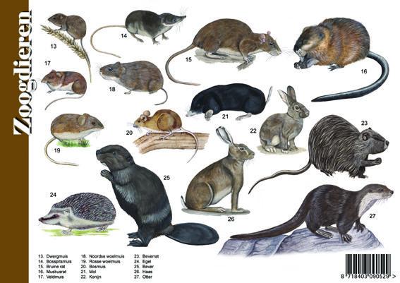 Herkenningskaart / zoekkaart Zoogdieren (achterzijde)
