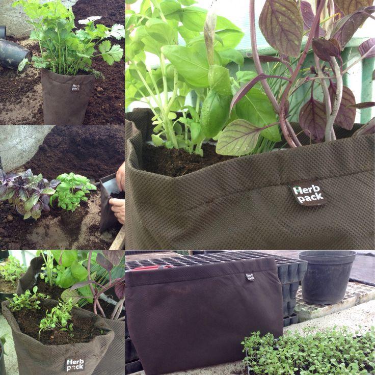 As minhas ervas aromáticas arrumadas nas Herb Pack!