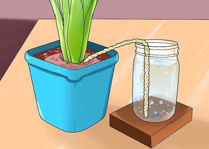 Ezzel a zseniális megoldással egy hónapig sem kell öntözni a növényeket! - Zöld Újság