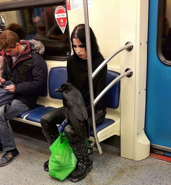 Sure, you're goth, but are you dejectedly riding the subway with your raven goth?