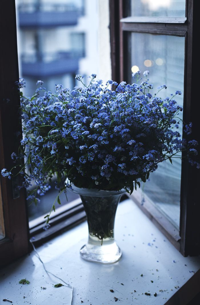 My beautiful 84 yr old neighbour just delivered a bunch of these forget-me-nots to me. Never, sweet Pearlie x