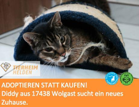 Diddy wurde beim strömendem Regen aus dem Straßengraben zum Katzenschutzverein Wollgast gebracht.  http://www.tierheimhelden.de/katze/tierheim-wolgast/hauskatze/diddy/6982-1/  Diddy ist lieber mittendrin statt nur dabei. Er liebt Menschen und ist gerne im Geschehen. Mit anderen Katzen hat er kein Problem. Im neuen Zuhause sollte er Freigang haben, aber auch auf dem Sofa willkommen sein.