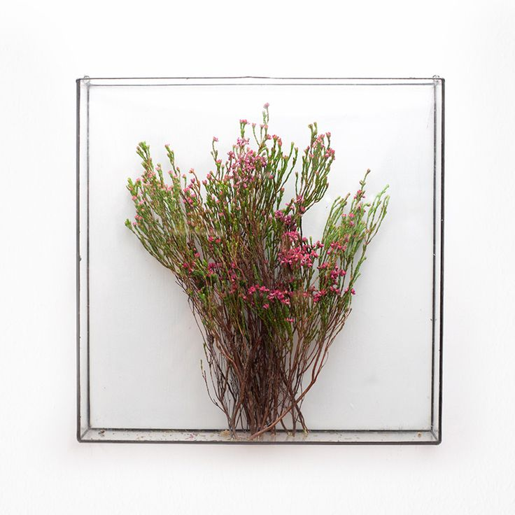 Square wall terrarium by Angles & Earth.