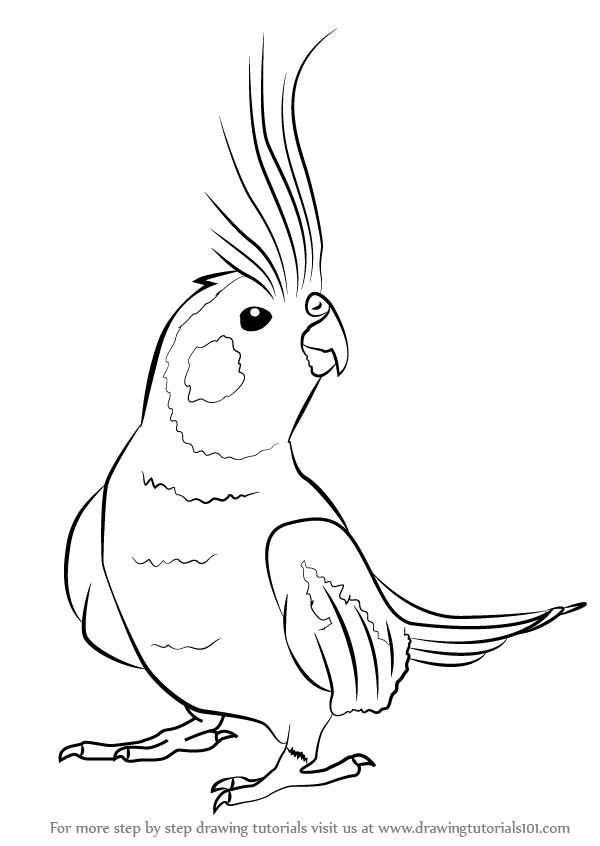 Learn How to Draw a Cockatiel (Birds) Step by Step : Drawing Tutorials