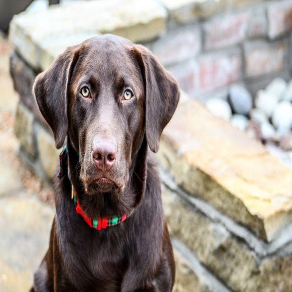 Dog Training Tips In Tamil Language Dogtrainingobedience Dogs