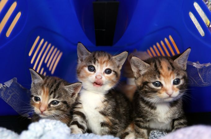 Kittens What To Expect 5 Essential Tips For When You Adopt Newborn Kittens Kitten Care Baby Kittens