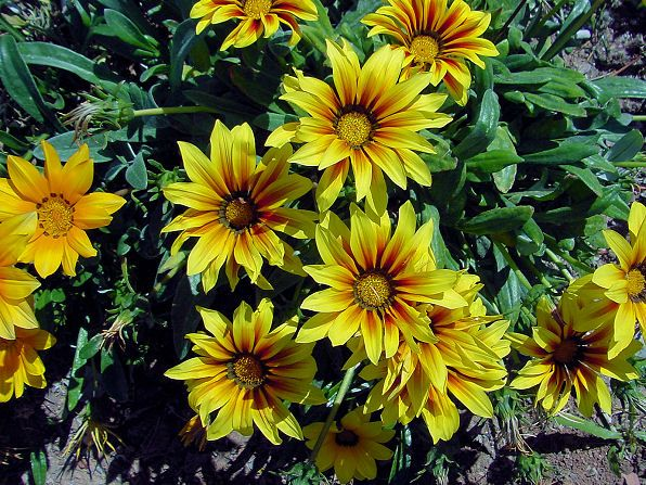 1000 Images About Plants For Full Sun On Pinterest