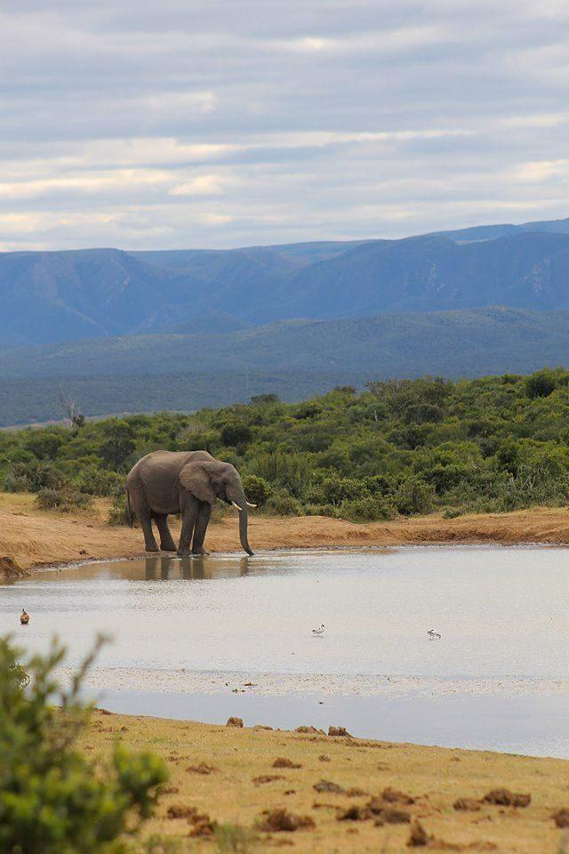 Water Hole at the Addo Elephant Park, near Port Elizabeth, Eastern Cape, South Africa.