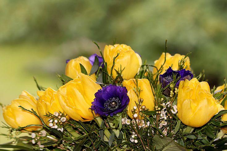 Bukett tulpaner och anemoner