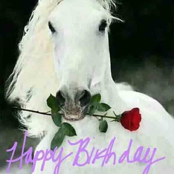 15 Hilarious Happy Birthday Horse Meme Photos Happy Birthday Horse Happy Birthday Niece Happy Birthday Beautiful Daughter