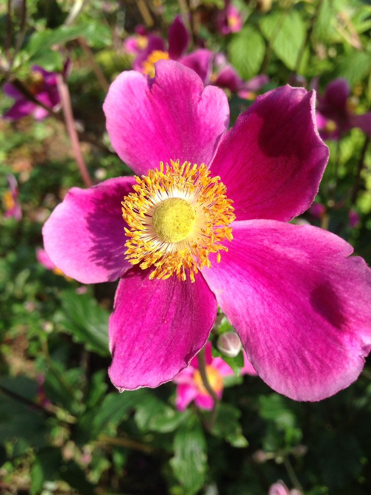 Garden colour, Raheny, August 2014