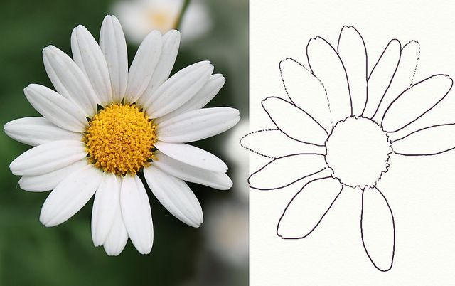 Flower drawing - how to draw flowers -