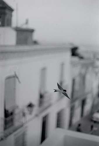 Petit oiseau face a une grande ville. Le flou renforce le regard sur l'oiseau. Le flou de la ville montre qu'on ne sait pas ce qui se trouve dans cette ville. L'oiseau se trouve sur un point de croisement des lignes des tiers.