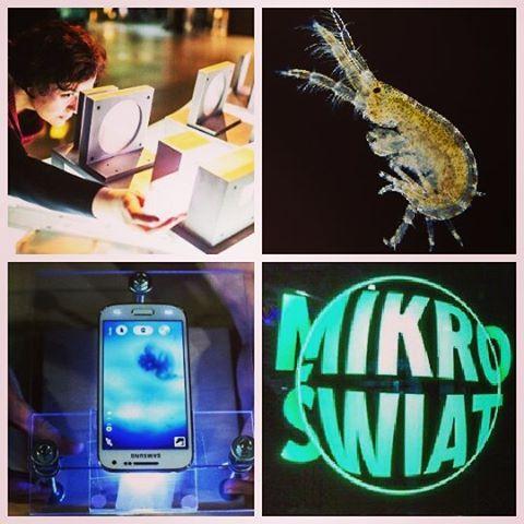 Wystawa Mikroświat - oglądaliśmy organizmy powiększone 500, 1000, 2000, 10 000 razy./ The exhibition Microworld - we watched organisms magnified 500, 1000, 2000, 10 000 times.